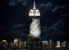 New York's Empire State Building to project endangered species light show